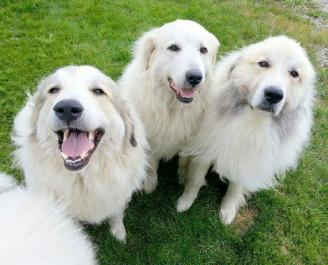3 smiles - Copy