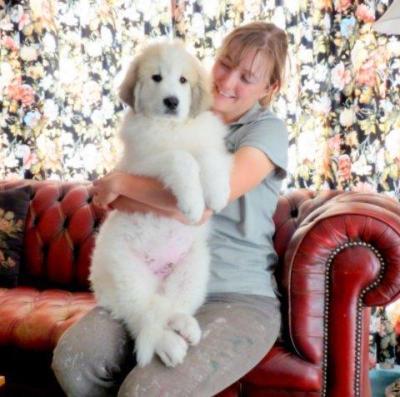 Brie's pup1 - Copy
