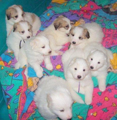 Brie's pups - Copy