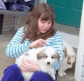 socializing pups